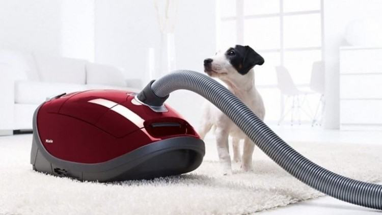 Resistance to wear and tear from your pets' claws is one property to  consider for any flooring, as well as stain resistance for the occasional  accident or