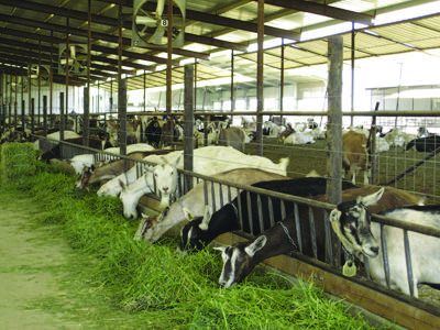 Minimize pen moves two to 10 days before calving