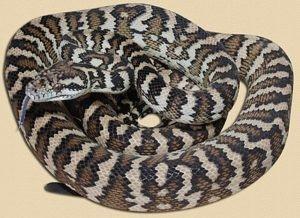 The New England Reptile Distributors aka  NERD has been