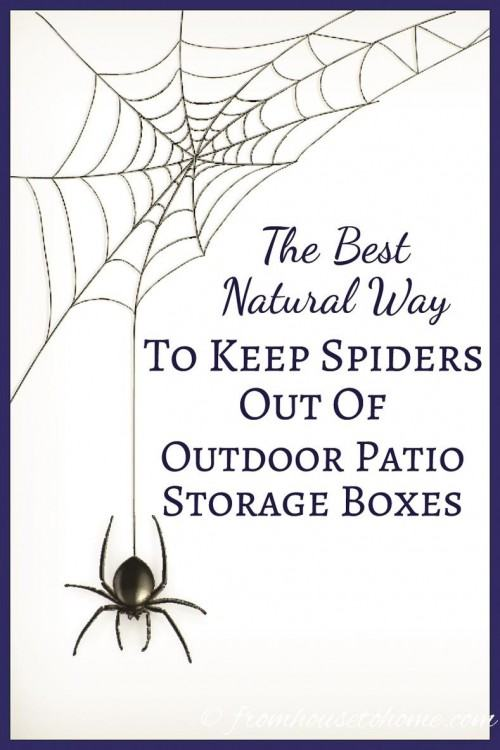 How to Get Rid of Tiny Red Spiders on Lawn Furniture