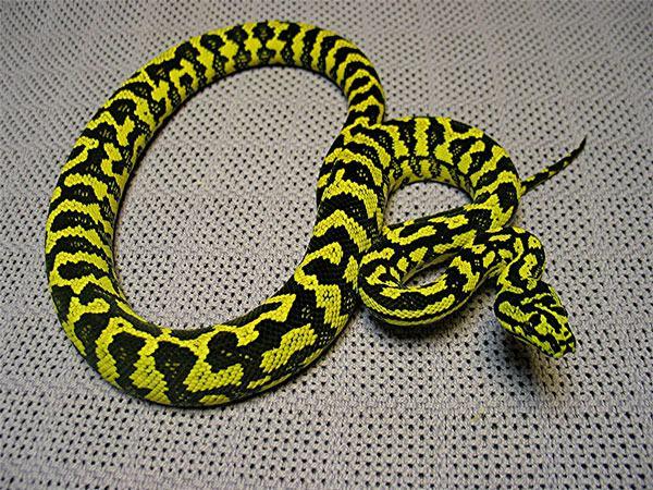 Definitely one of my  favorite snakes